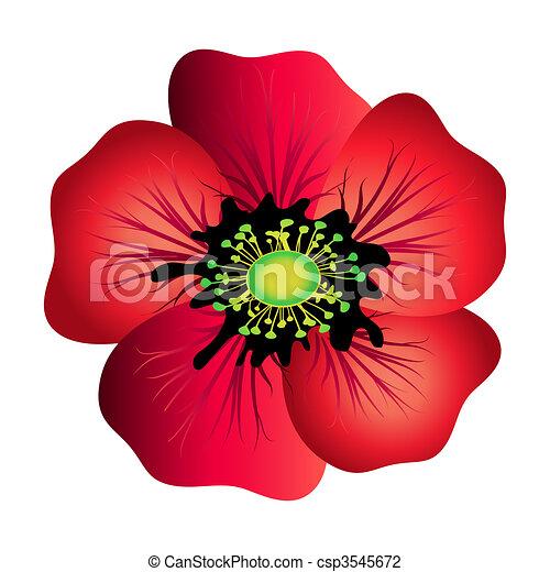 Red poppy isolated  - csp3545672