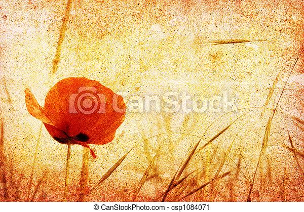 red poppy - csp1084071