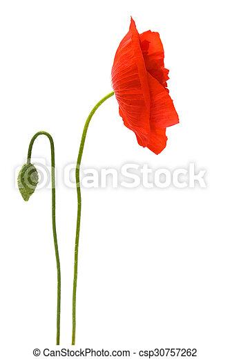 Red poppy - csp30757262