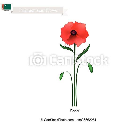 Red poppy the popular flower of turkmenistan turkmenistan flower red poppy the popular flower of turkmenistan csp35562261 mightylinksfo