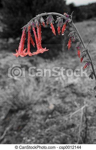 Red Raindrop Flower - csp0012144