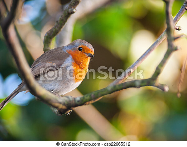 red robin bird on a tree branch red robin bird perched on a tree