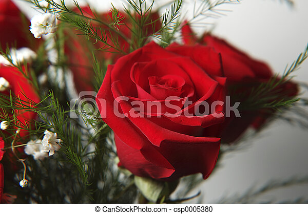 Red Rose 2 - csp0005380