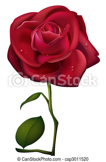 Red Rose and waterdrop - csp3011520
