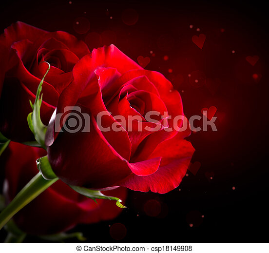 Red Rose Flower isolated on Black. St. Valentine's Day - csp18149908