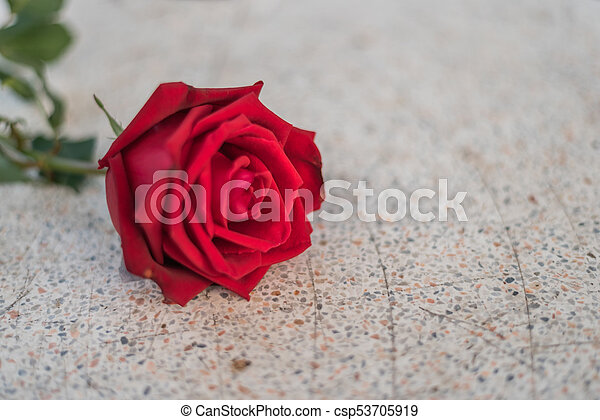 Red Rose Flower On Stone Floor In Valentine S Day Red Rose Flower