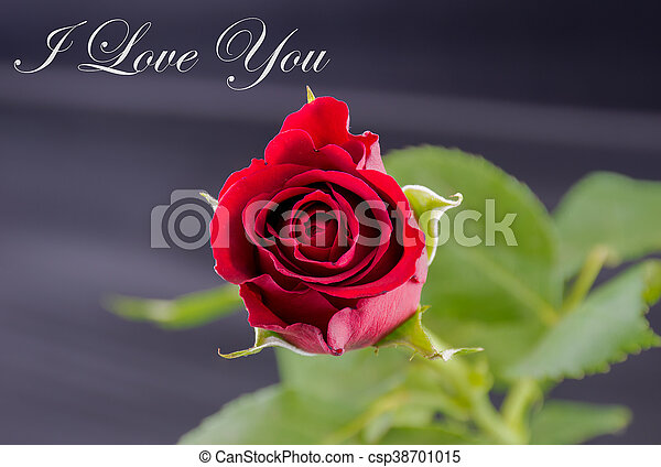 Red Rose I Love You