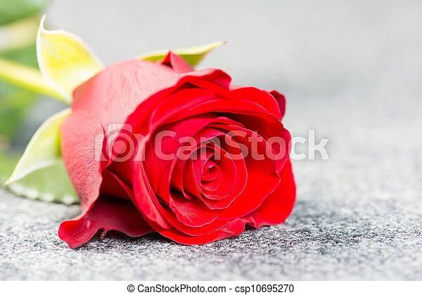 Red rose on a grey cloth - csp10695270
