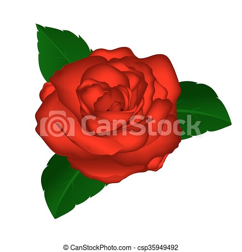 Red Rose On A White Background Illustration Of Flowers