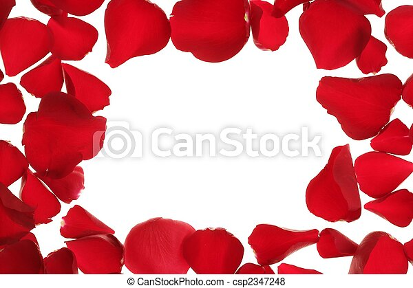 Red rose petals frame border, white copy space - csp2347248