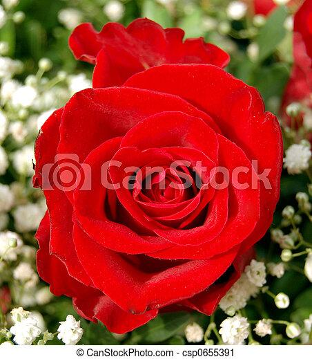 Red rose - csp0655391