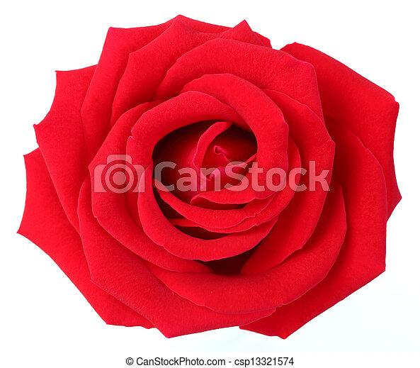 Red rose - csp13321574