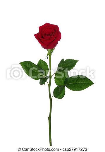 Red rose  - csp27917273