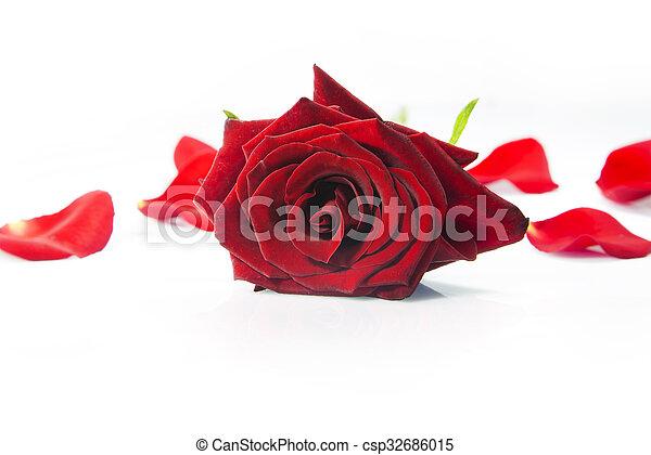 red rose - csp32686015