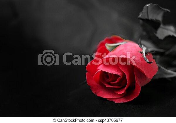Red rose - csp43705677