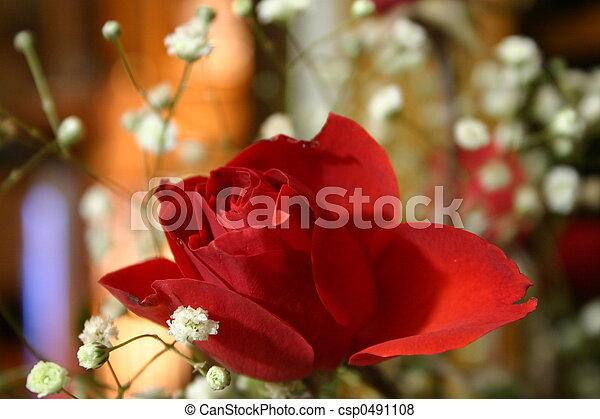 Red Rose - csp0491108