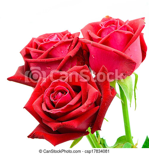 red rose - csp17834081