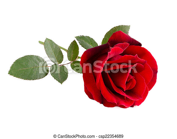 Red Rose - csp22354689