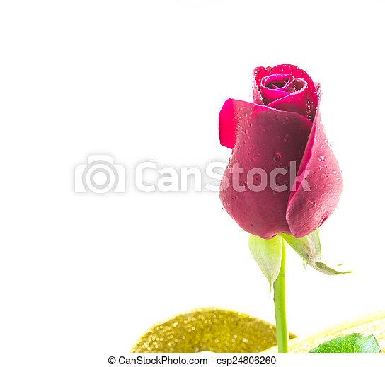 red rose - csp24806260