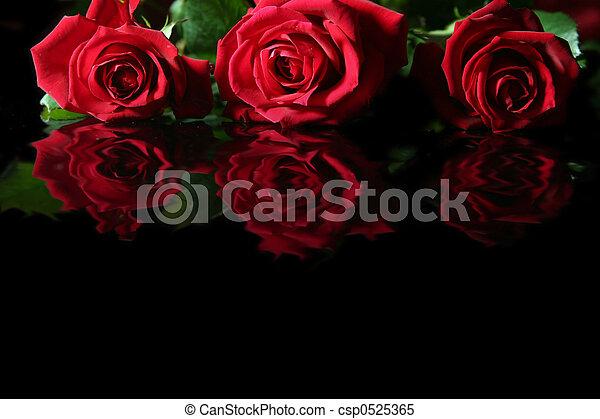 Red rose - csp0525365