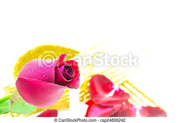 red rose. - csp24806242