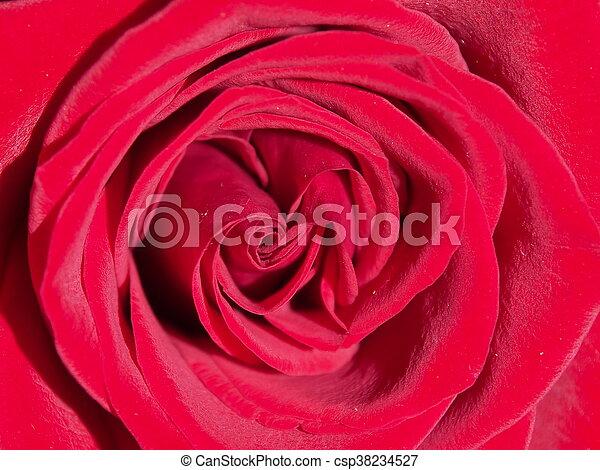 Red Rose Interno Di Una Rosa Rossa