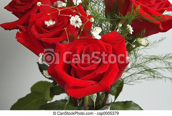 Red Rose - csp0005379
