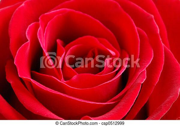 Red rose - csp0512999
