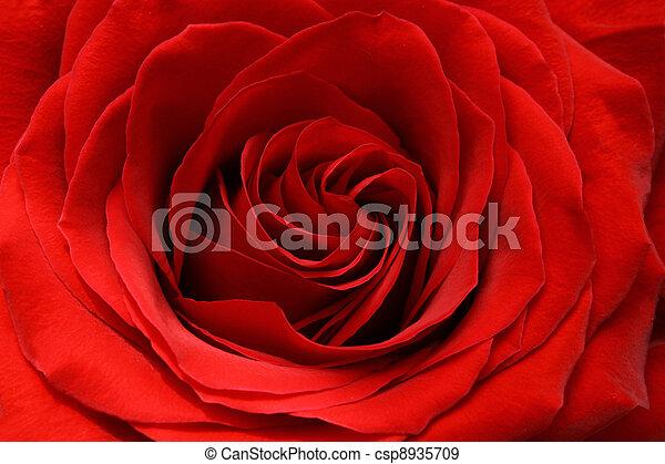red rose - csp8935709