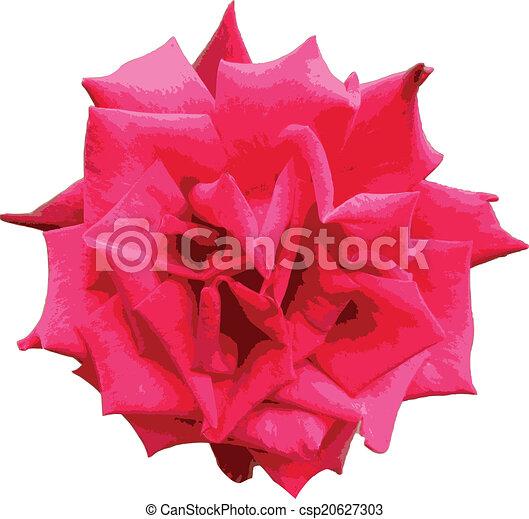 RED ROSE - csp20627303