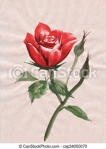 Red Rose Watercolor Painting Red Rose Flower Original Watercolor