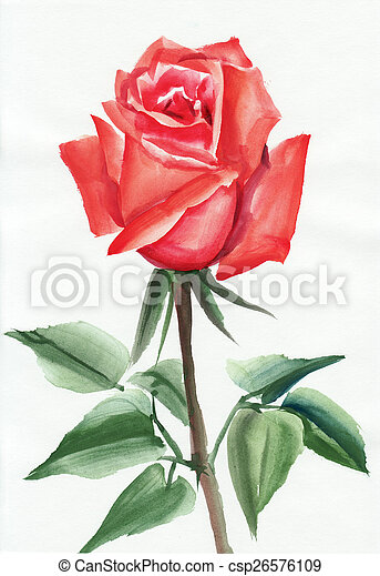 Red Rose Watercolor Painting Red Rose Original Watercolor Painting