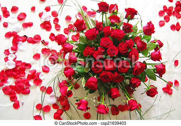 Red roses 1 - csp21639403
