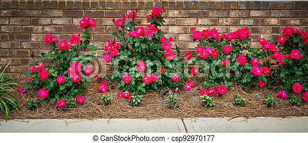 Red Roses on Brick Wall - csp92970177
