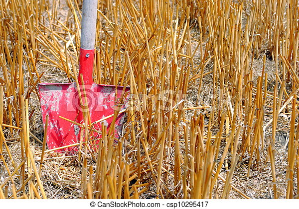 red shovel in a wheat field - csp10295417
