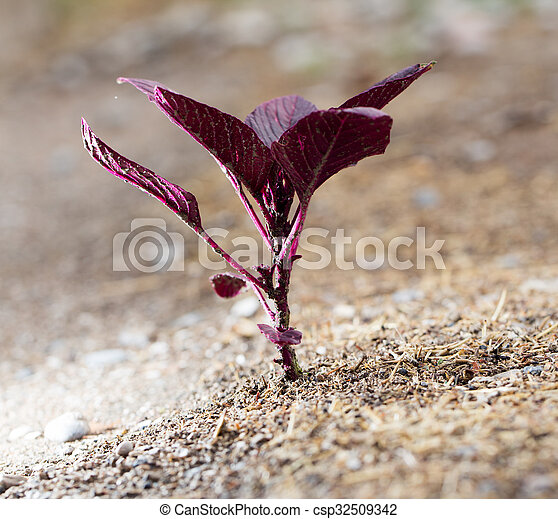 red small plant in the ground - csp32509342