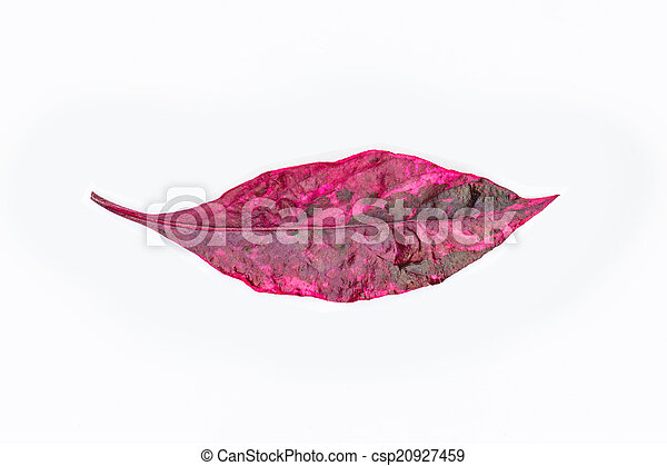 Red spring leaves isolated on white background - csp20927459