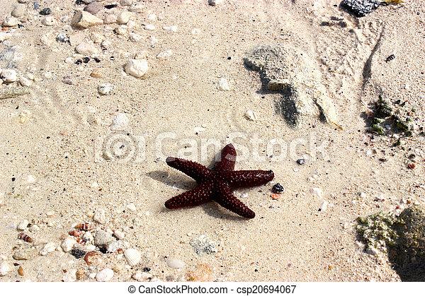 Red Starfish - csp20694067