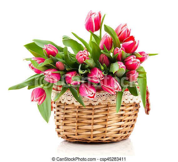 Red tulip flowers in a basket on a white background - csp45283411