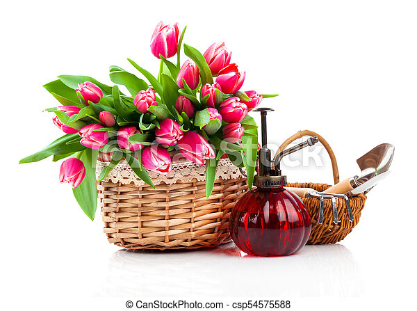 Red tulip flowers in a basket on a white background - csp54575588