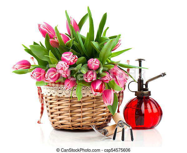 Red tulip flowers in a basket on a white background - csp54575606