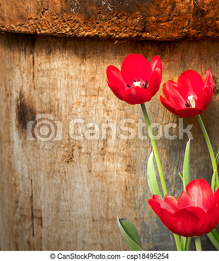 Red tulips in the garden on wood background - csp18495254