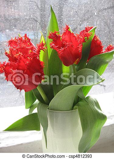 red tulips on the windowsill - csp4812393