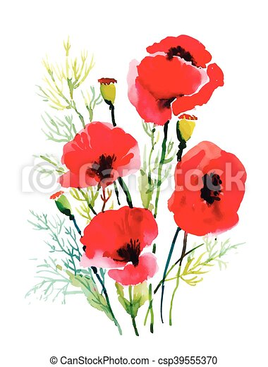 Red watercolor poppies flowers isolated on white background. - csp39555370