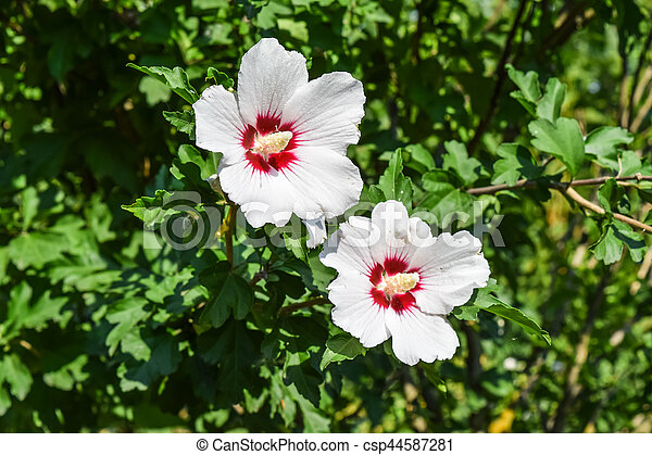 Red white flowers with five petals two flowers are not branches of red white flowers with five petals two flowers are not branches of a tree mightylinksfo