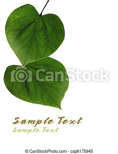 Redbud Leaves - csp6175945