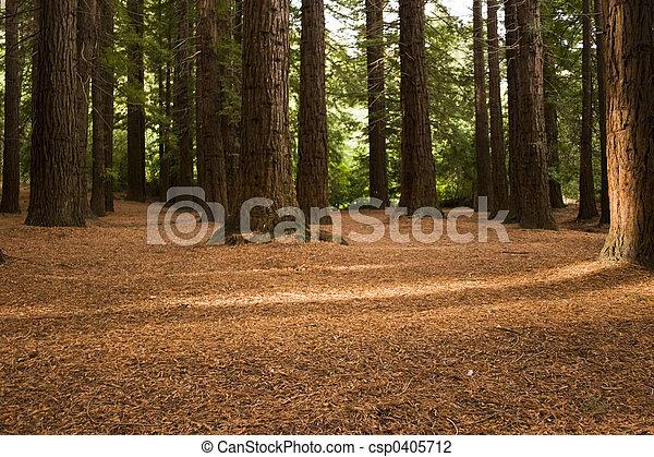 Redwood Forest 03 - csp0405712
