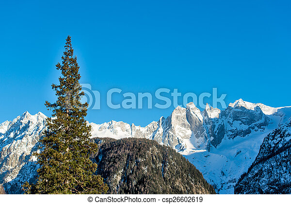 Redwood in the mountains - csp26602619