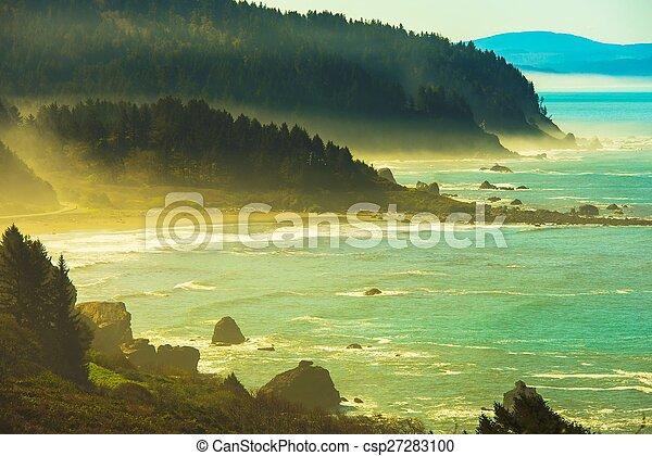 Redwood pazifische Küste - csp27283100