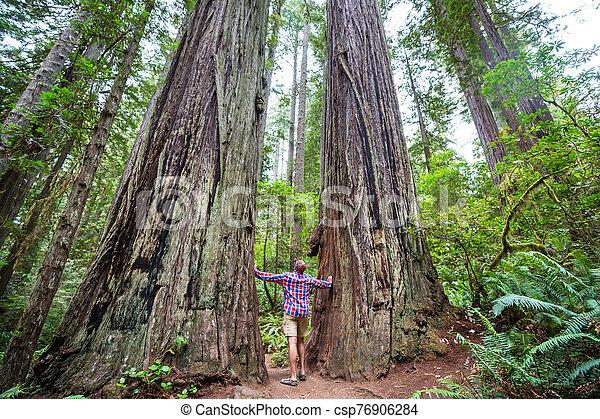 Redwoods - csp76906284